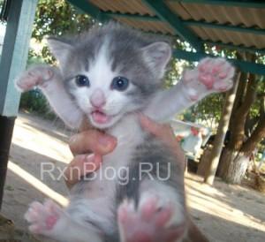 Похерфейс маленького кота